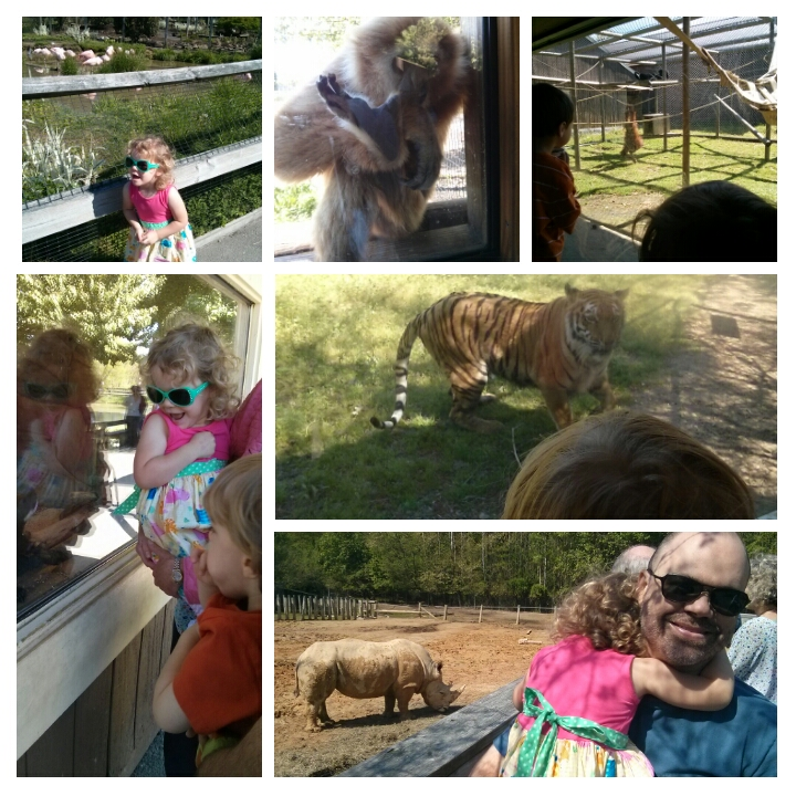 suzstreats Zoo Trip